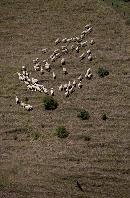 NZ_Sheep_Culture_ 027.jpg