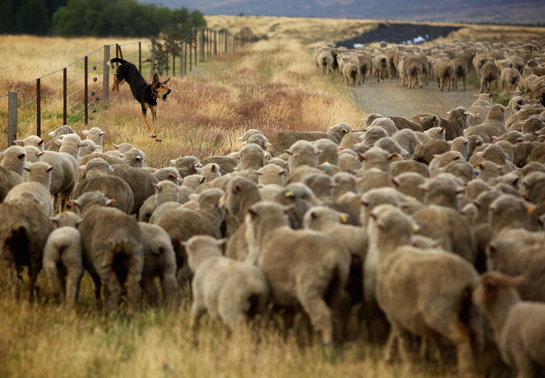 NZ_Sheep_Culture_ 029.jpg