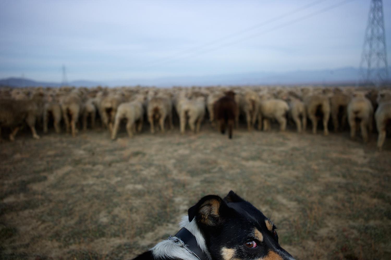 NZ_Sheep_Culture_ 033.jpg