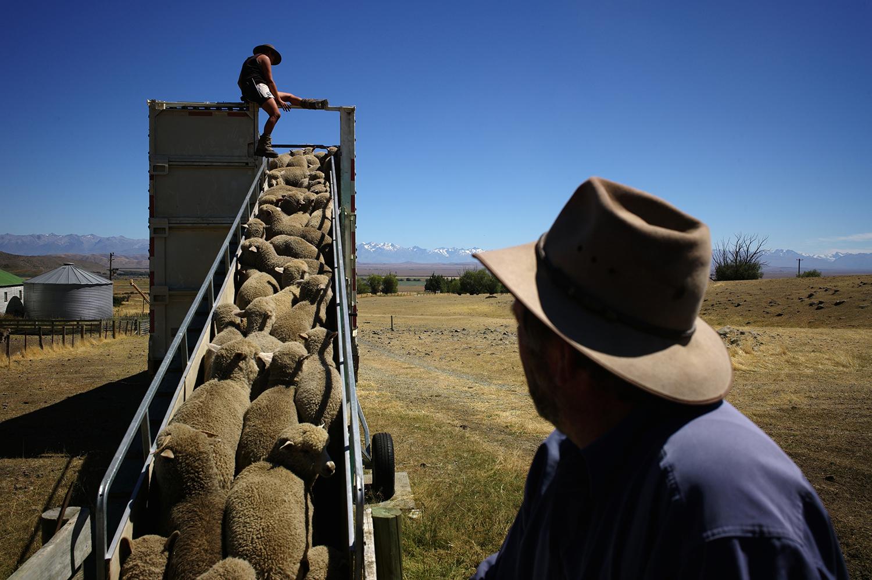 NZ_Sheep_Culture_ 034.jpg