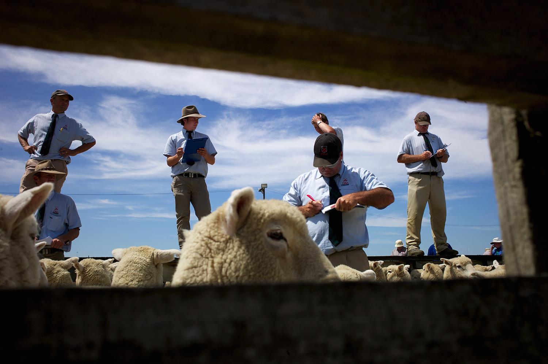 NZ_Sheep_Culture_ 035.jpg