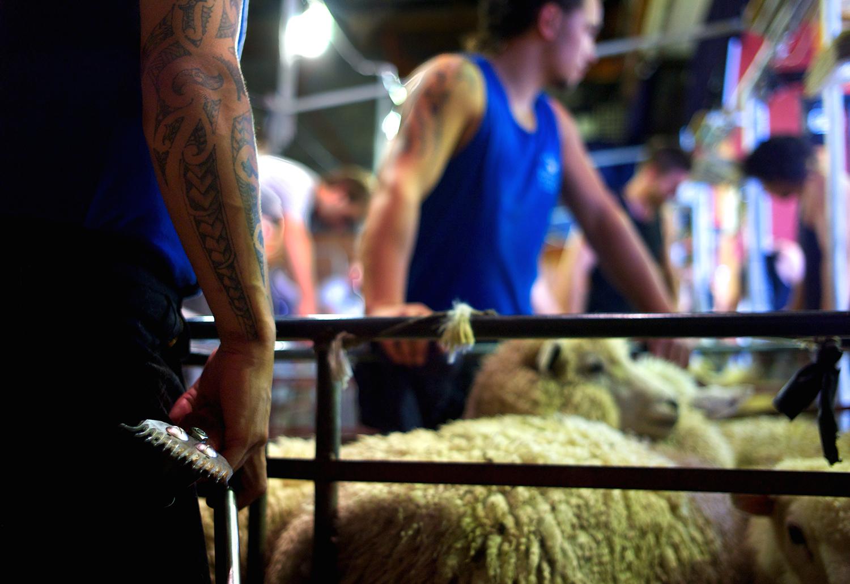 NZ_Sheep_Culture_ 038.jpg