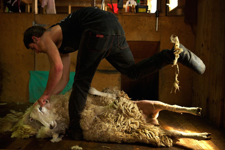 NZ_Sheep_Culture_ 041.jpg