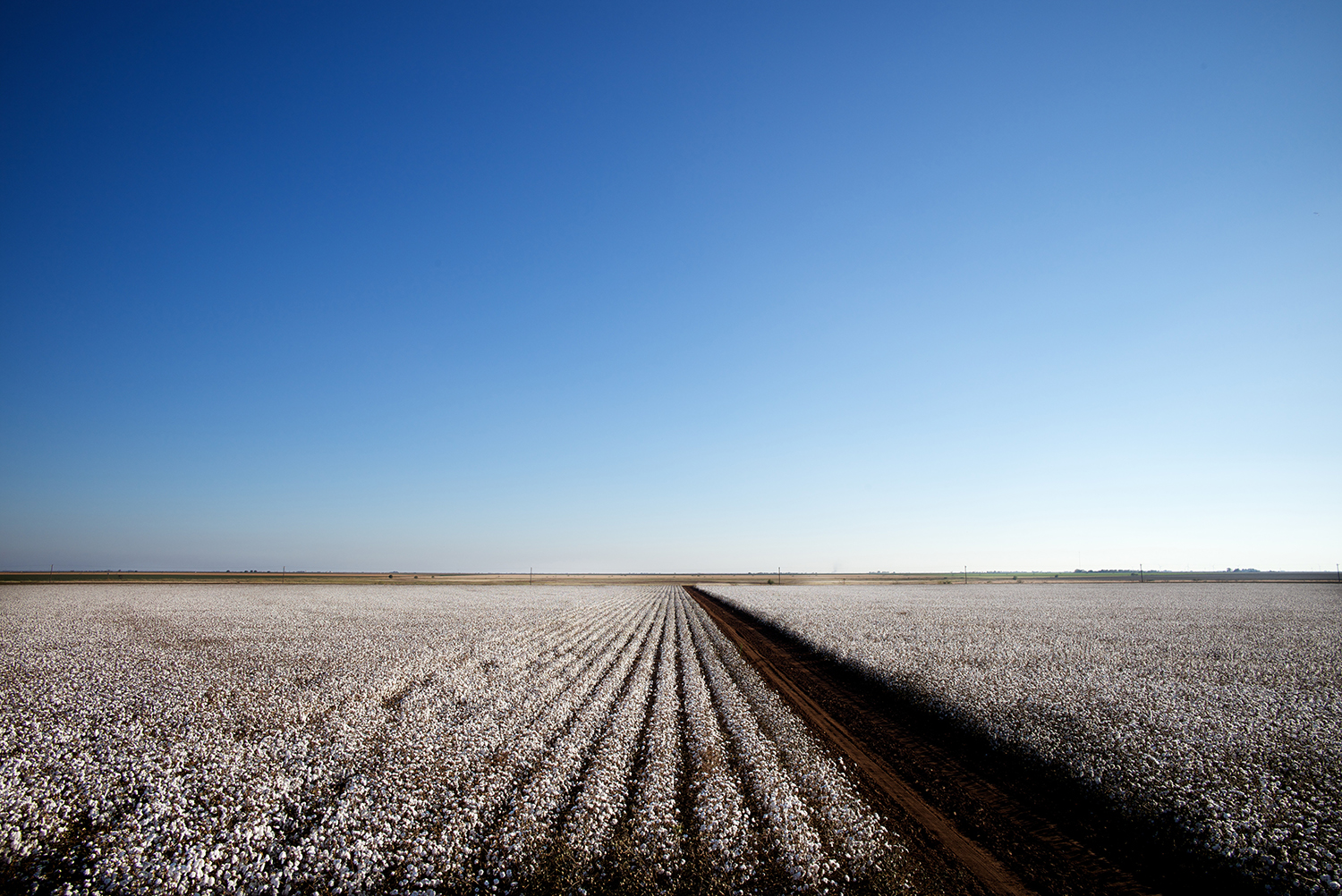 Cotton_USA_001.jpg