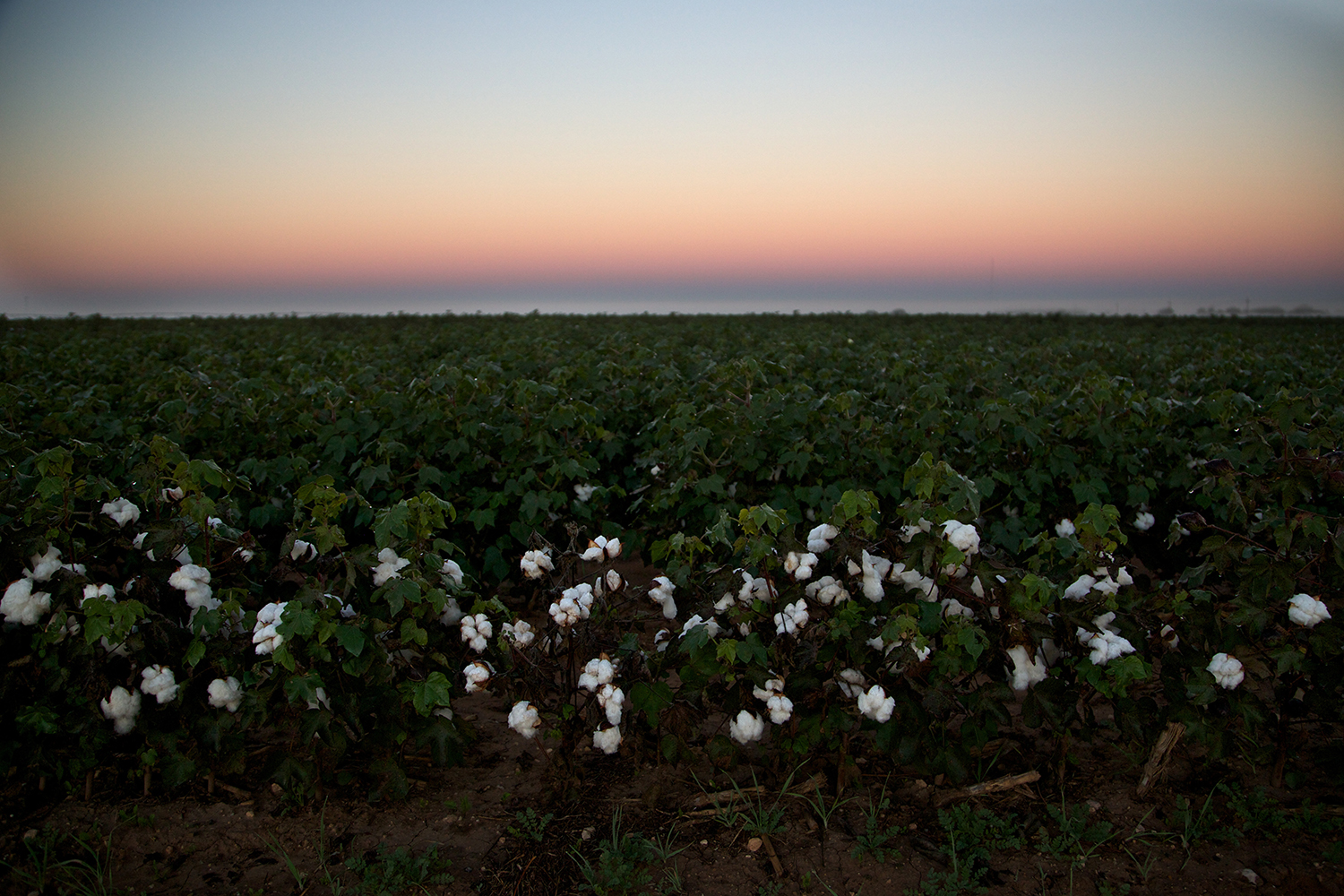 Cotton_USA_012.jpg
