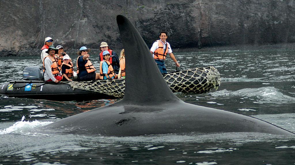 Lindblad Whale - v.com.jpg
