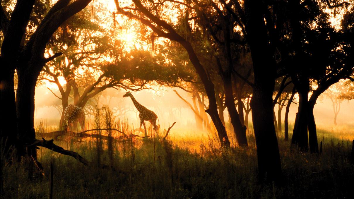 animal-kingdom-villas-jambo-gallery01.jpg