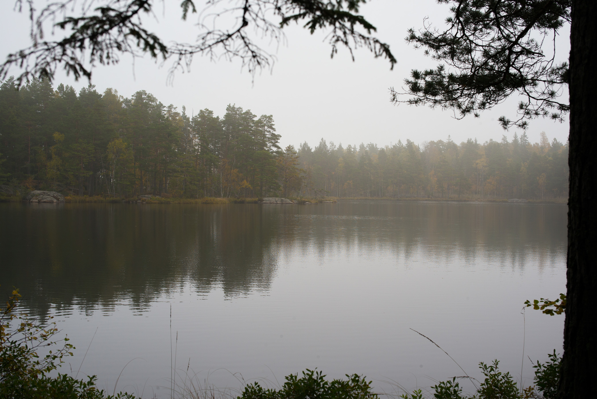 Ars Lake in Tyresta National Park on a cold, misty autumn day.