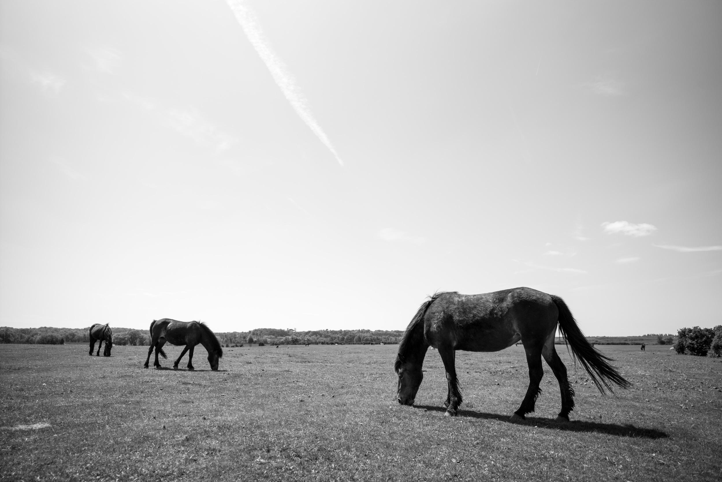 Ponies like to eat. (Leica Super-Elmar-M 21mm f/3.4 ASPH.)