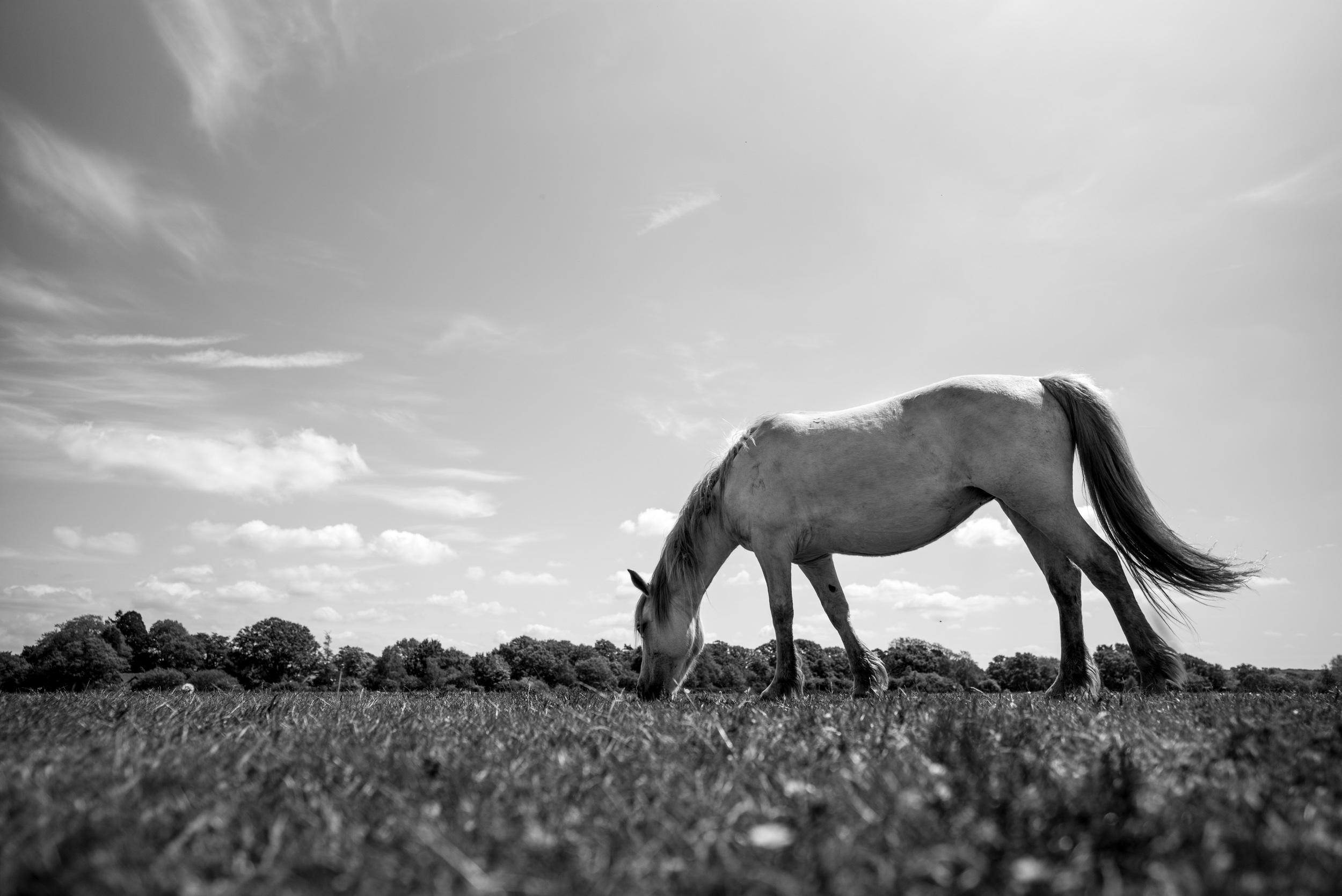 Epic pony shot. I love this lens so much. (Leica Super-Elmar-M 21mm f/3.4 ASPH.)