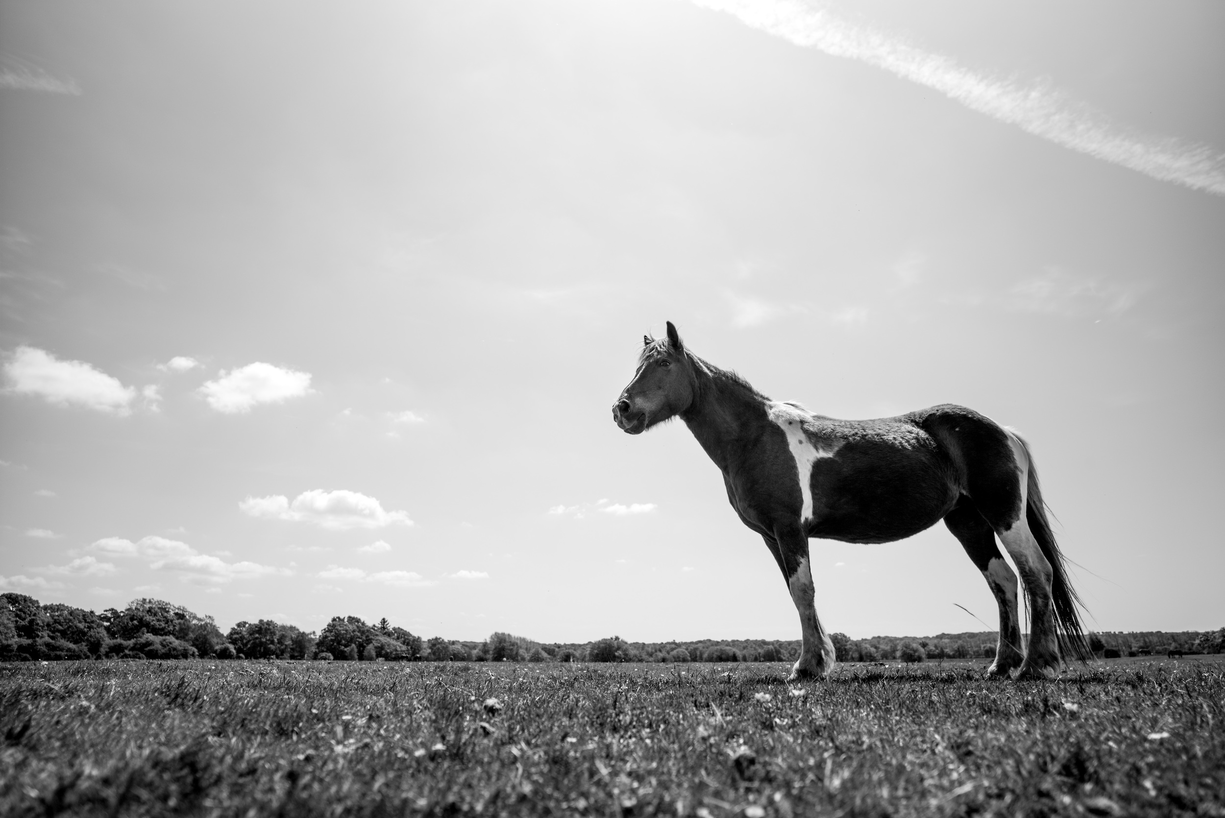 Epic pony shot. This one just stood and patiently posed for me for a bit.  (Leica Super-Elmar-M 21mm f/3.4 ASPH.)