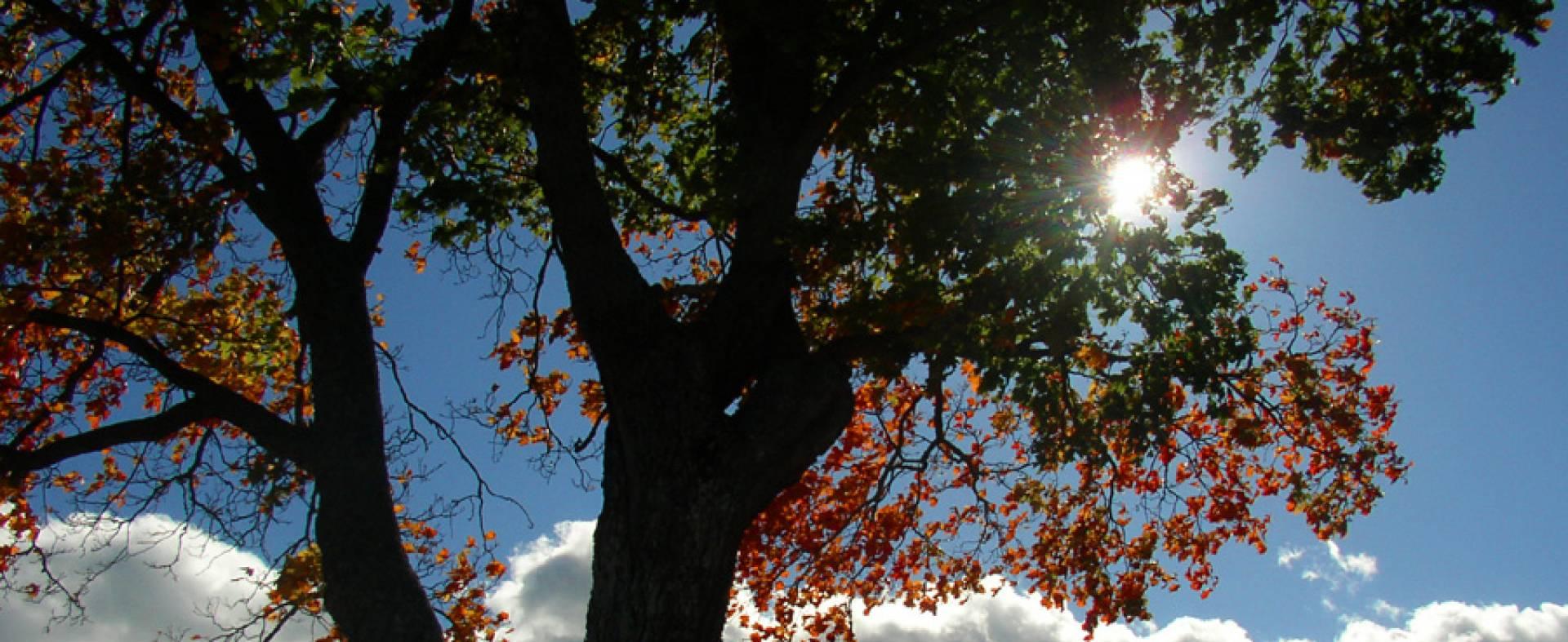nature-q-c-1920-787-8.jpg