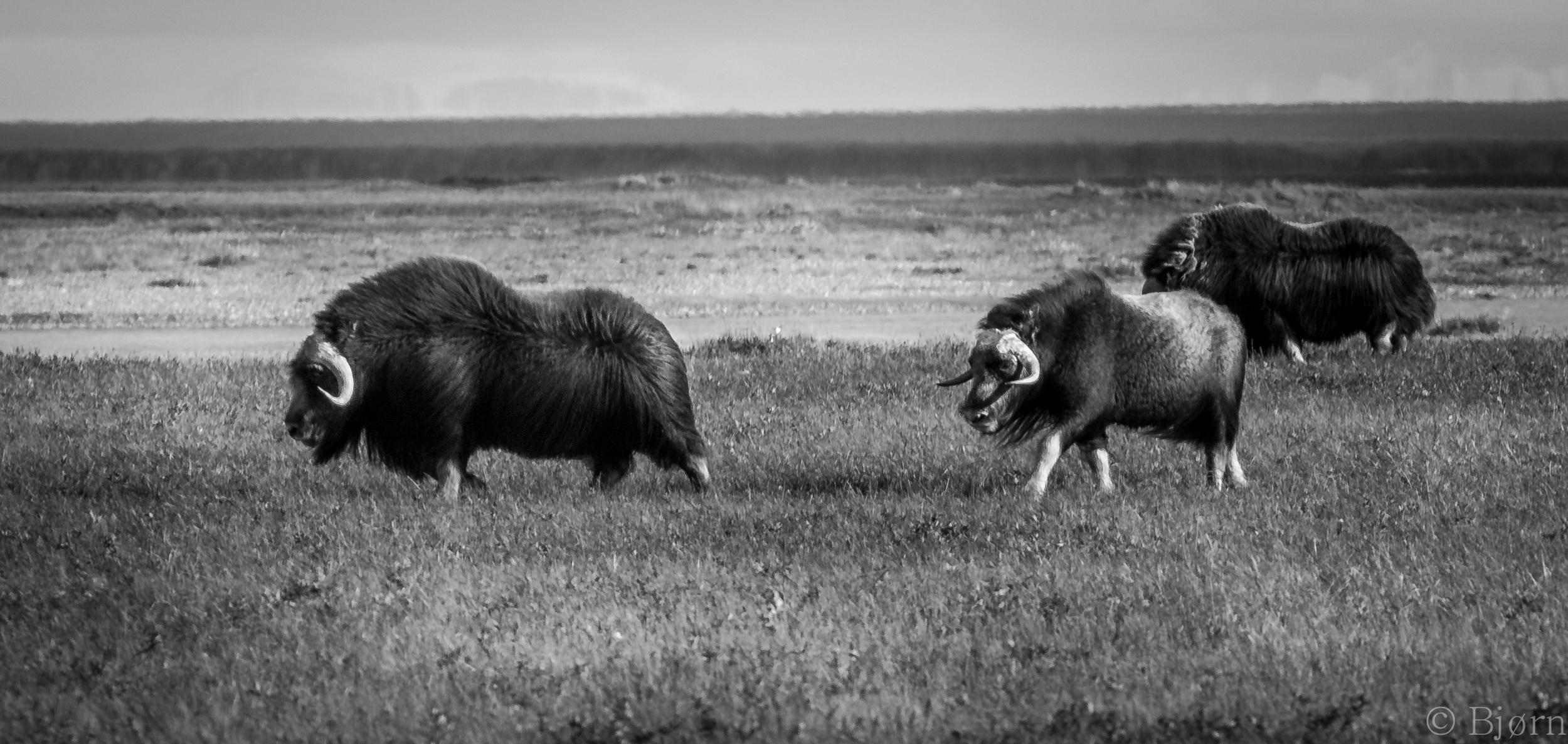 Deadhorse to Valdez_20120809_99_18 2.jpg