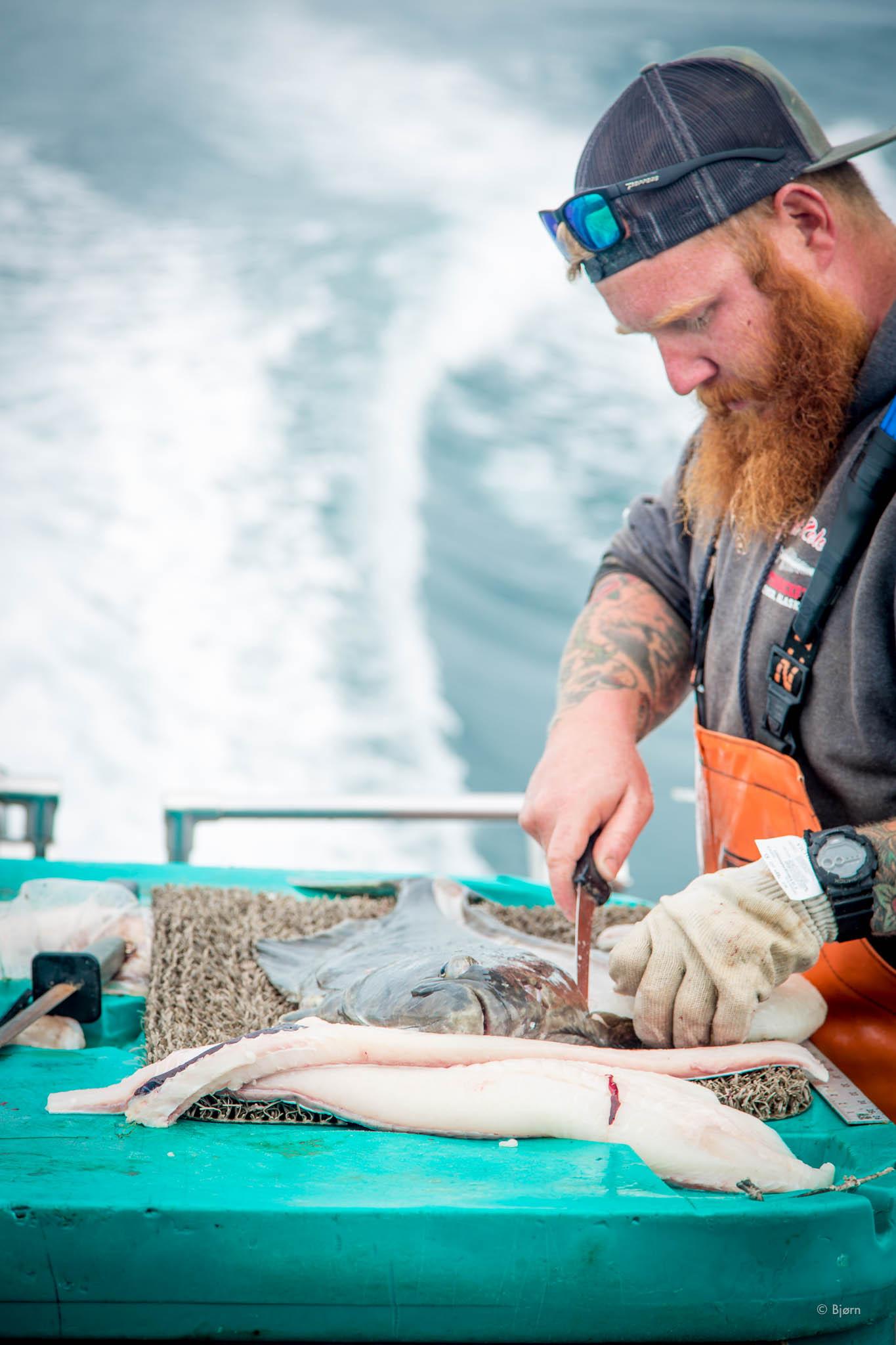 Doug fillets halibut - Kachemak Bay, Alaska.