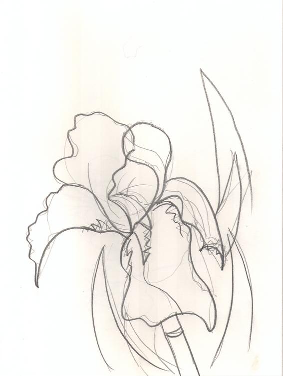 Iris 4.jpg
