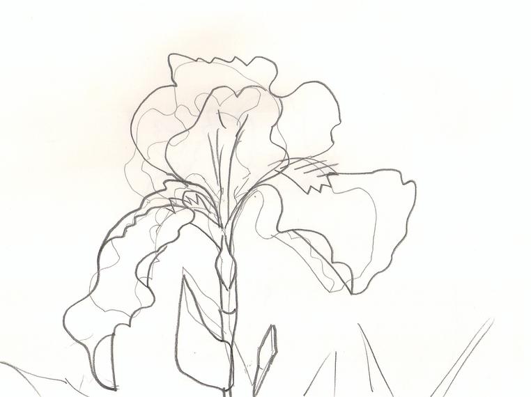 iris 2.jpg