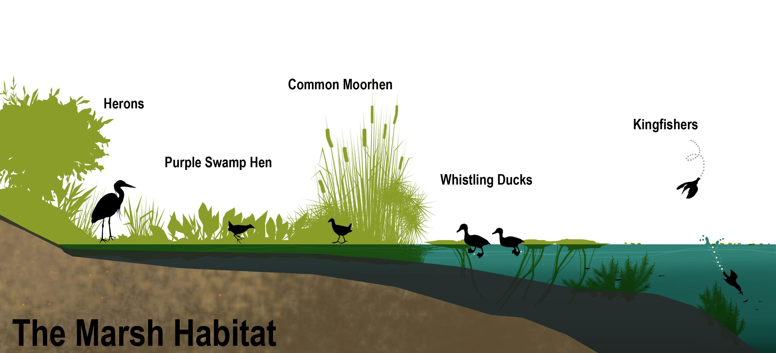 Marsh section mural.jpg