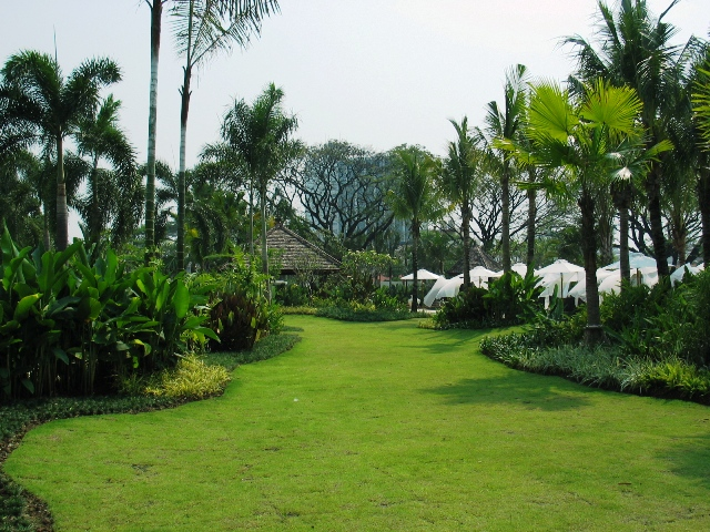 rear lawn area.JPG