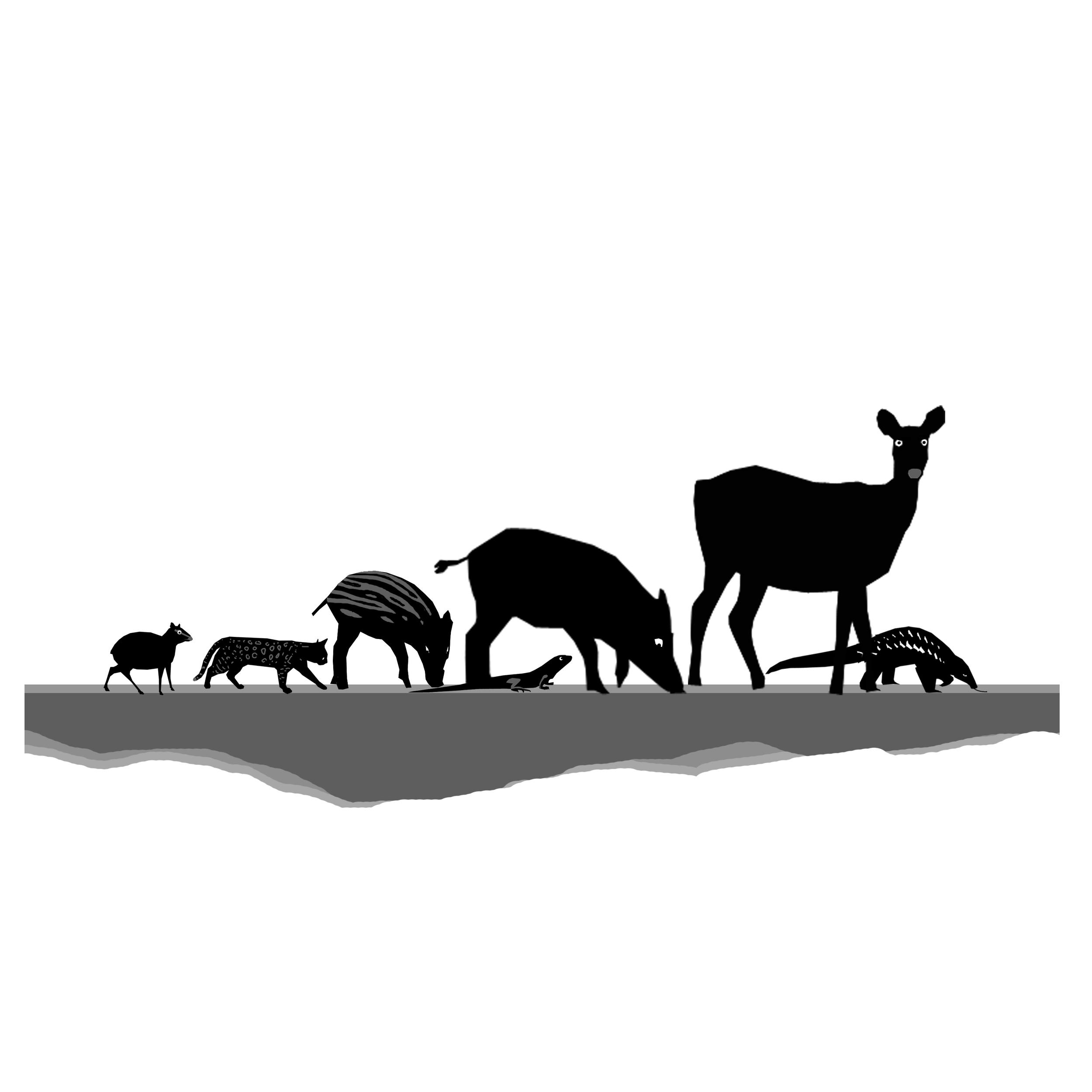 Animals square.jpg