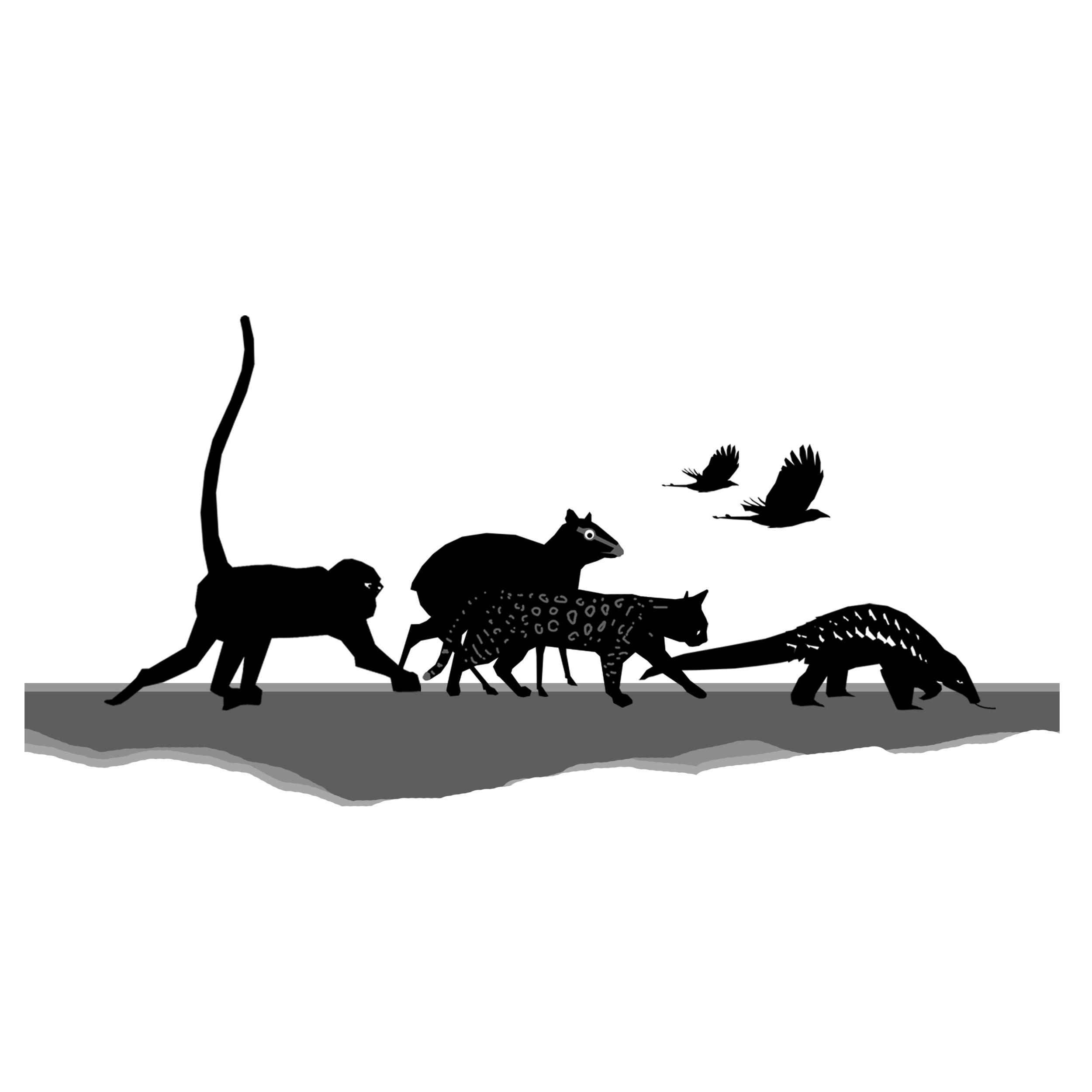 Animals square bridge animals.jpg