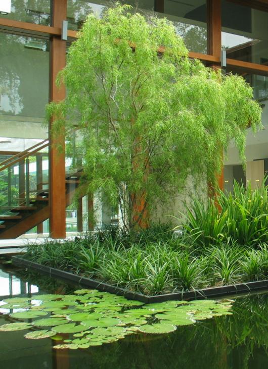 tanglin pond 1a.jpg