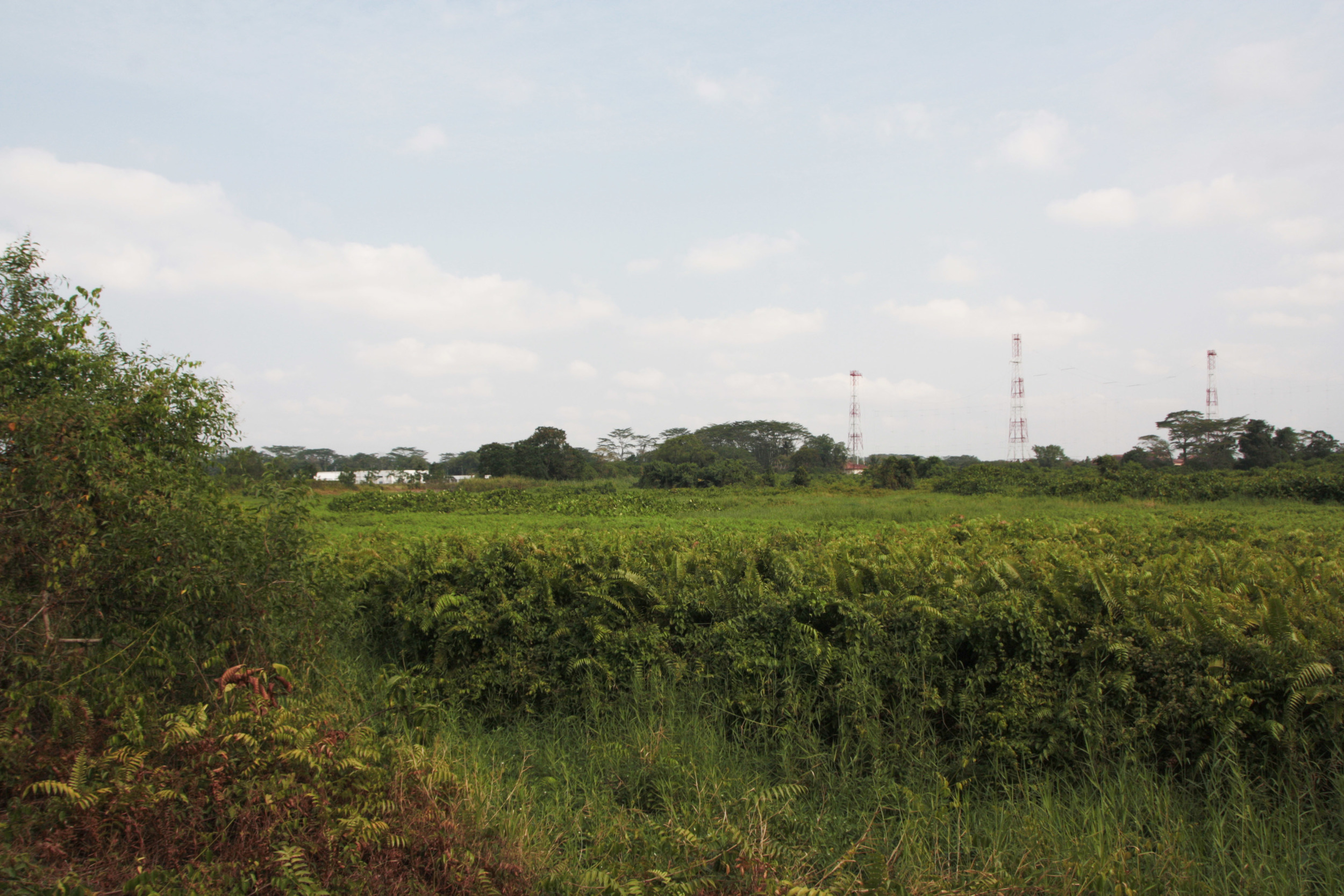 Main Marsh area at Kranji