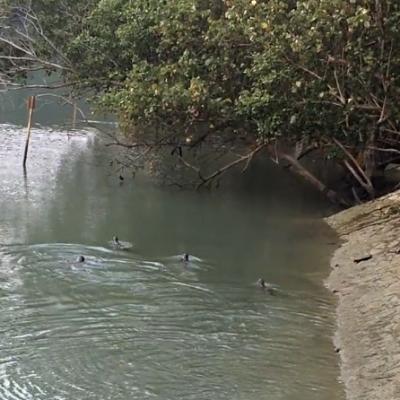 Otter Raft