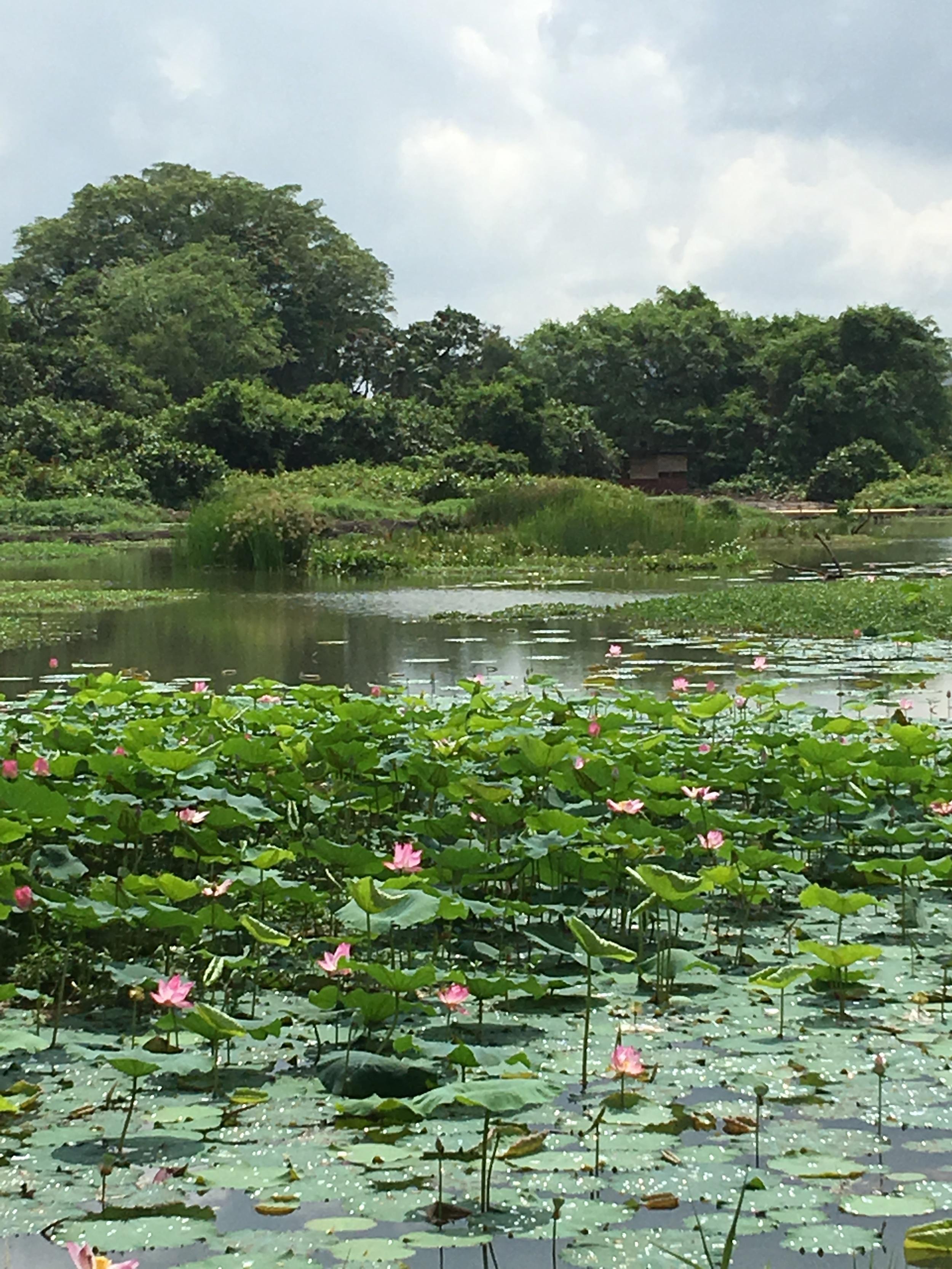 Kranji Marshes - West Marsh Pond SCLD