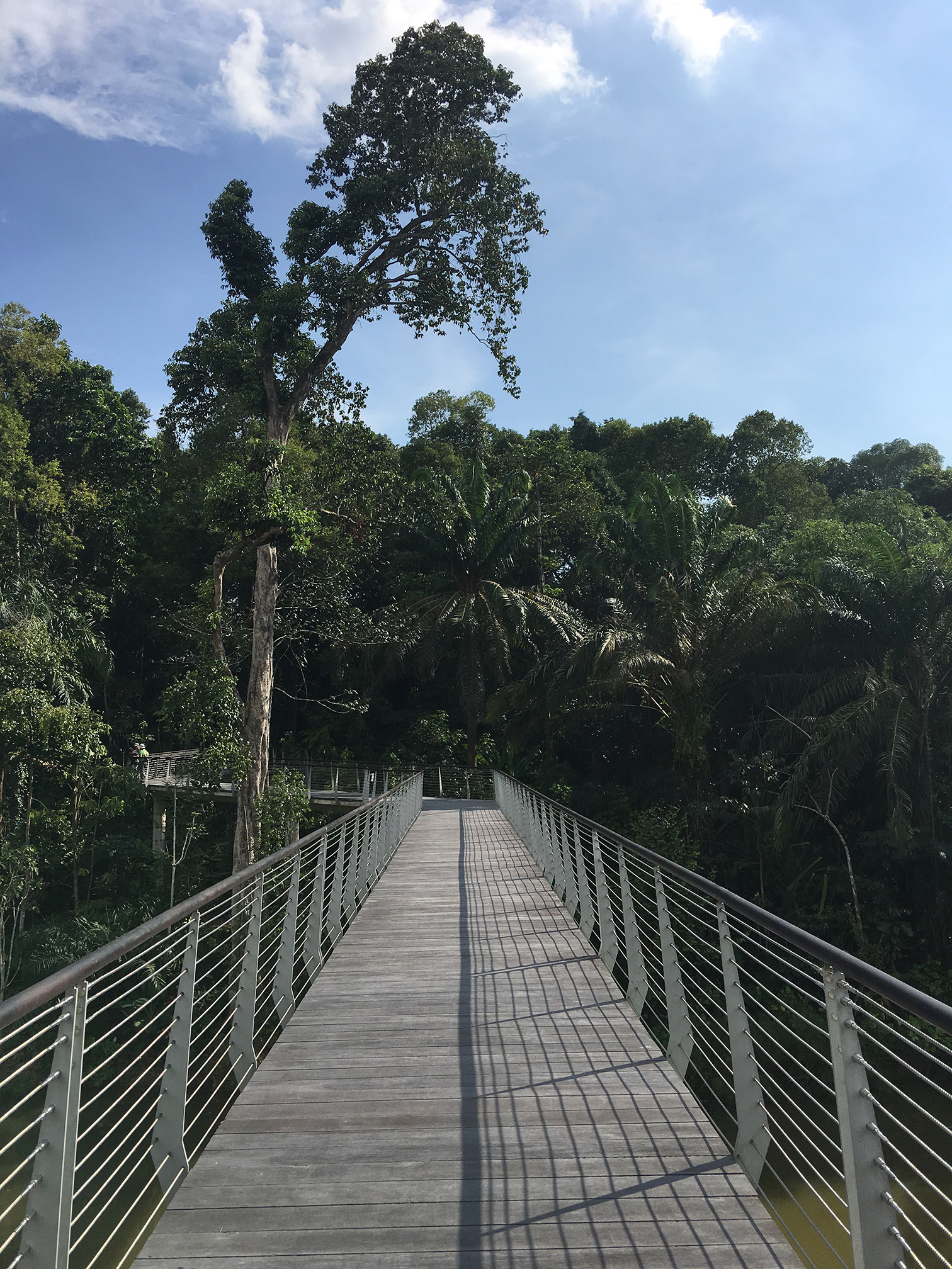 Canopy Walkway over wetland (new lake) at Learning Forest SBG - Stephen Caffyn Landscape Design