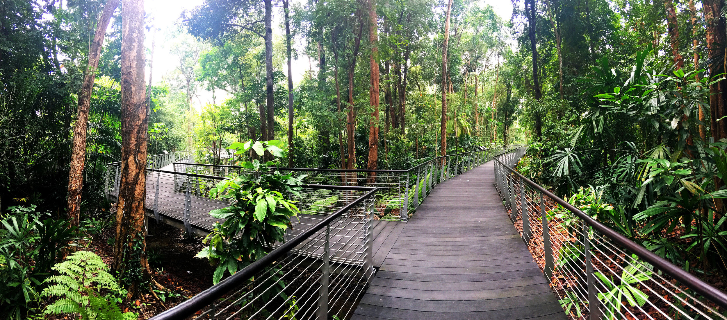 SPH Walk of Giants canopy walkways through the Learning Forest - Stephen Caffyn Landscape Design