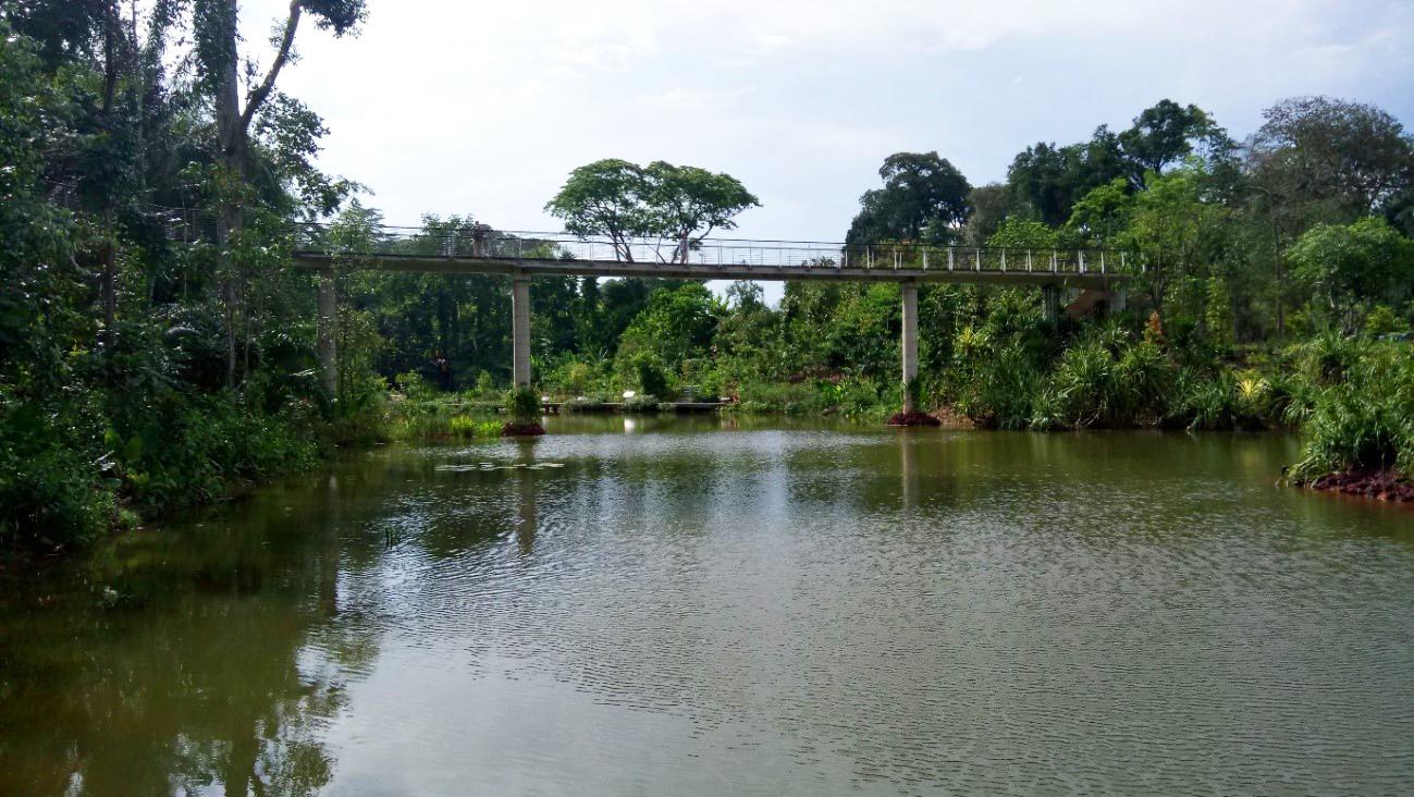 View from the Lower Wetland Boardwalk - Learning Forest @ Singapore Botanic Gardens - Stephen Caffyn Landscape Design
