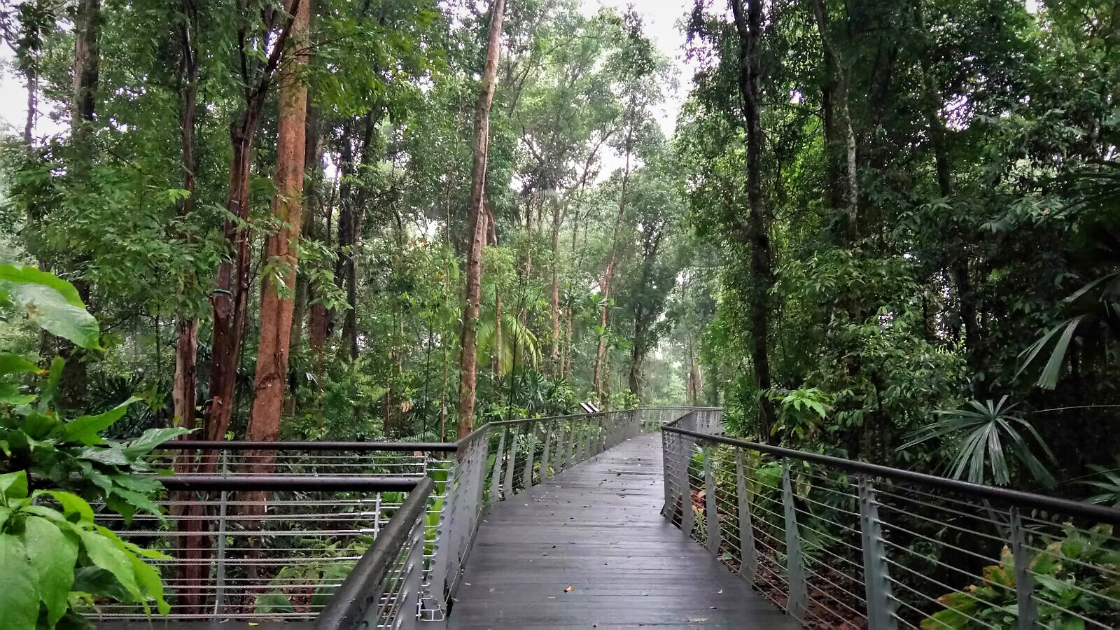 SPH Walk of Giants at the Learning Forest, Singapore Botanic Gardens Photo by Stephen Caffyn Landscape Design (SCLD)