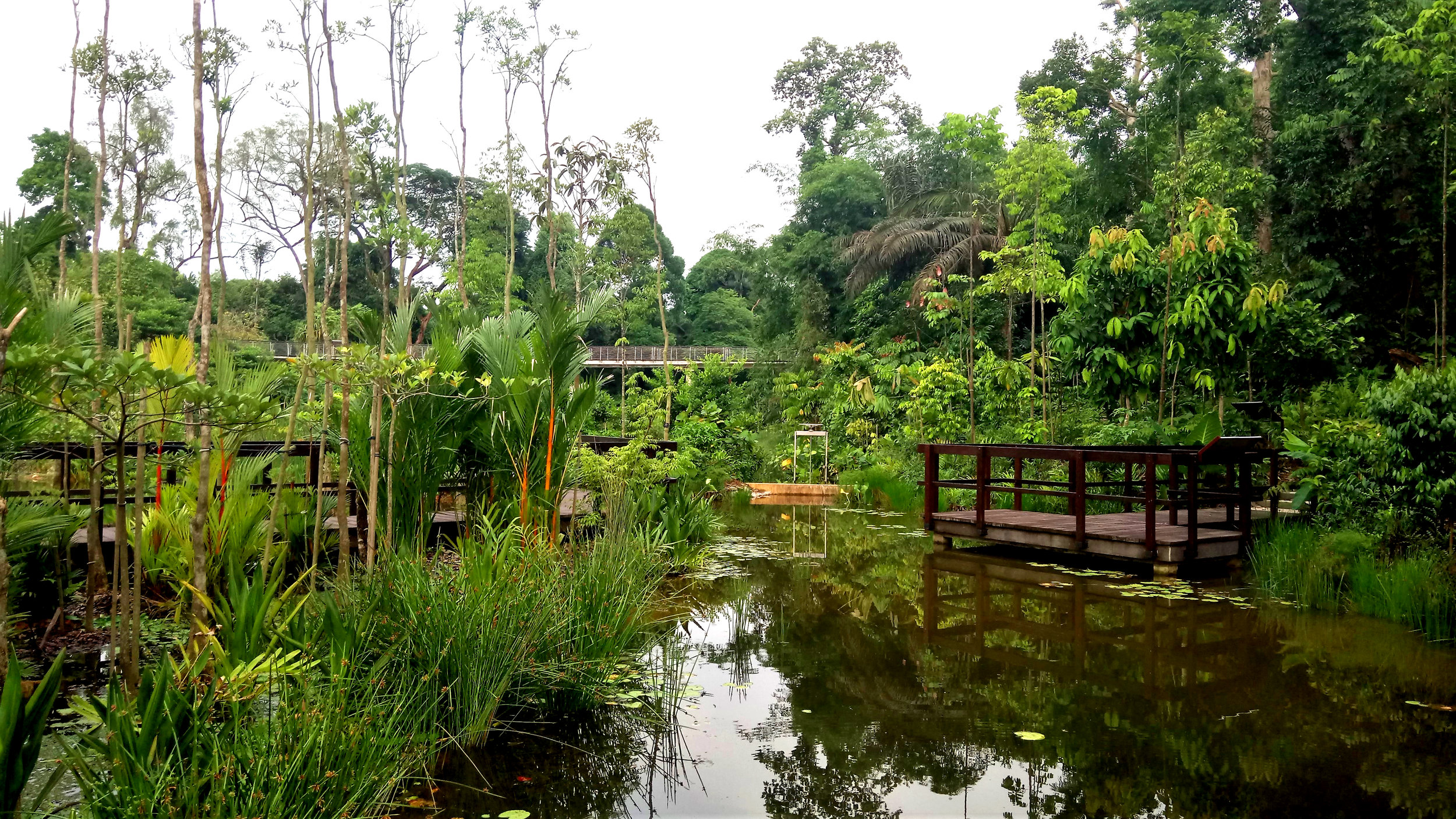 View of Pulai Marsh / Swamp Forest with jetty and sluice gate water control mechanism. Photo by Stephen Caffyn Landscape Design