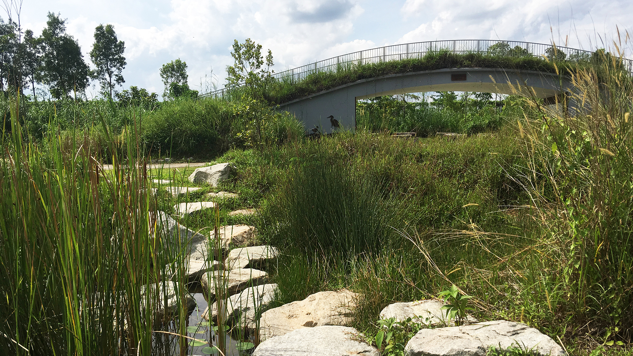Kingfisher Burrow with green roof at Kranji Marshes