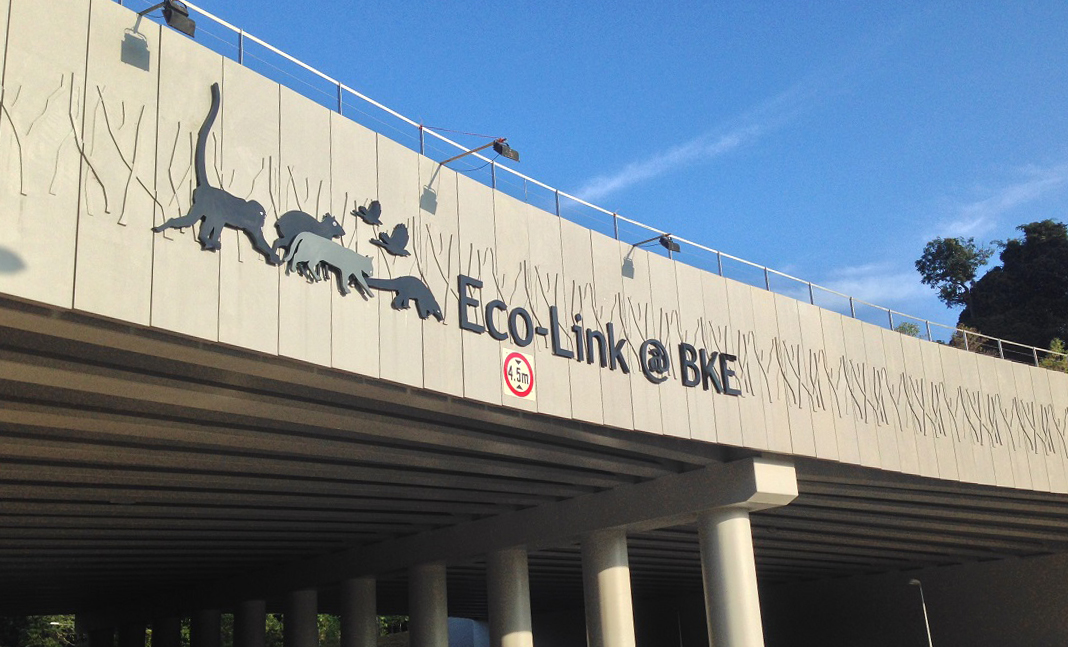 Newly planted trees barely visible on the Eco-Link@BKE in 2013