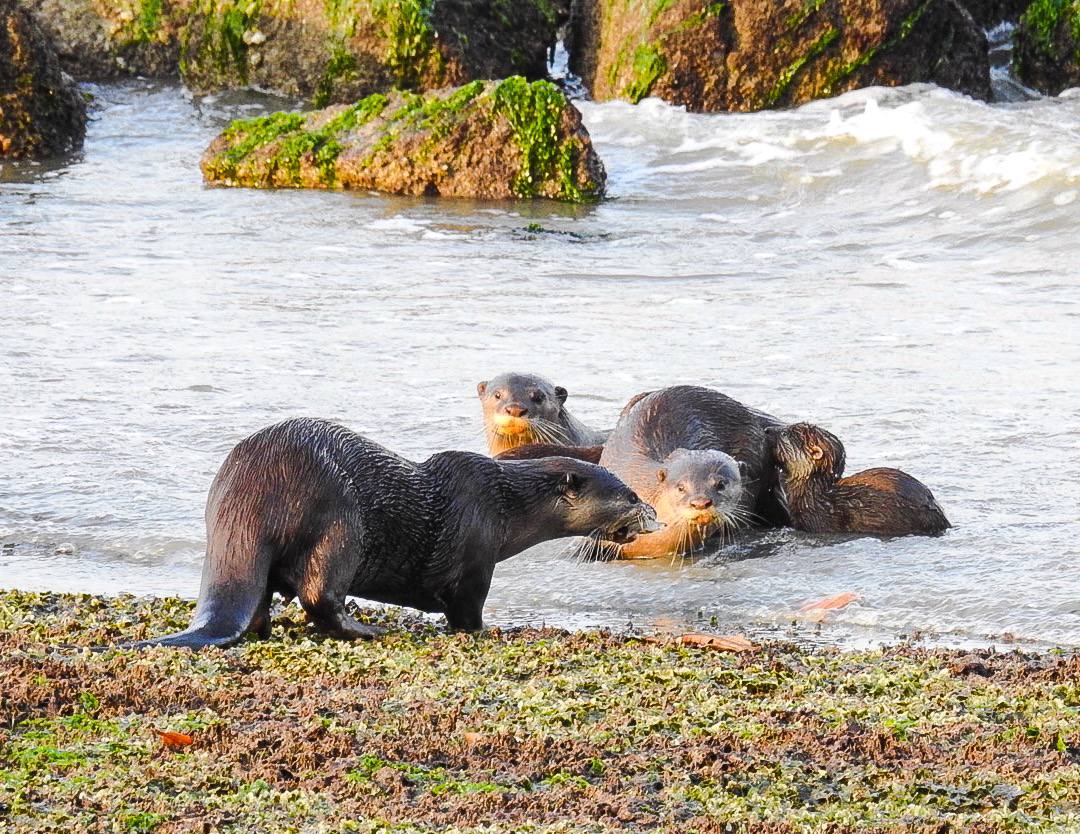 This Otter doesn't seem to be sharing but we will now !