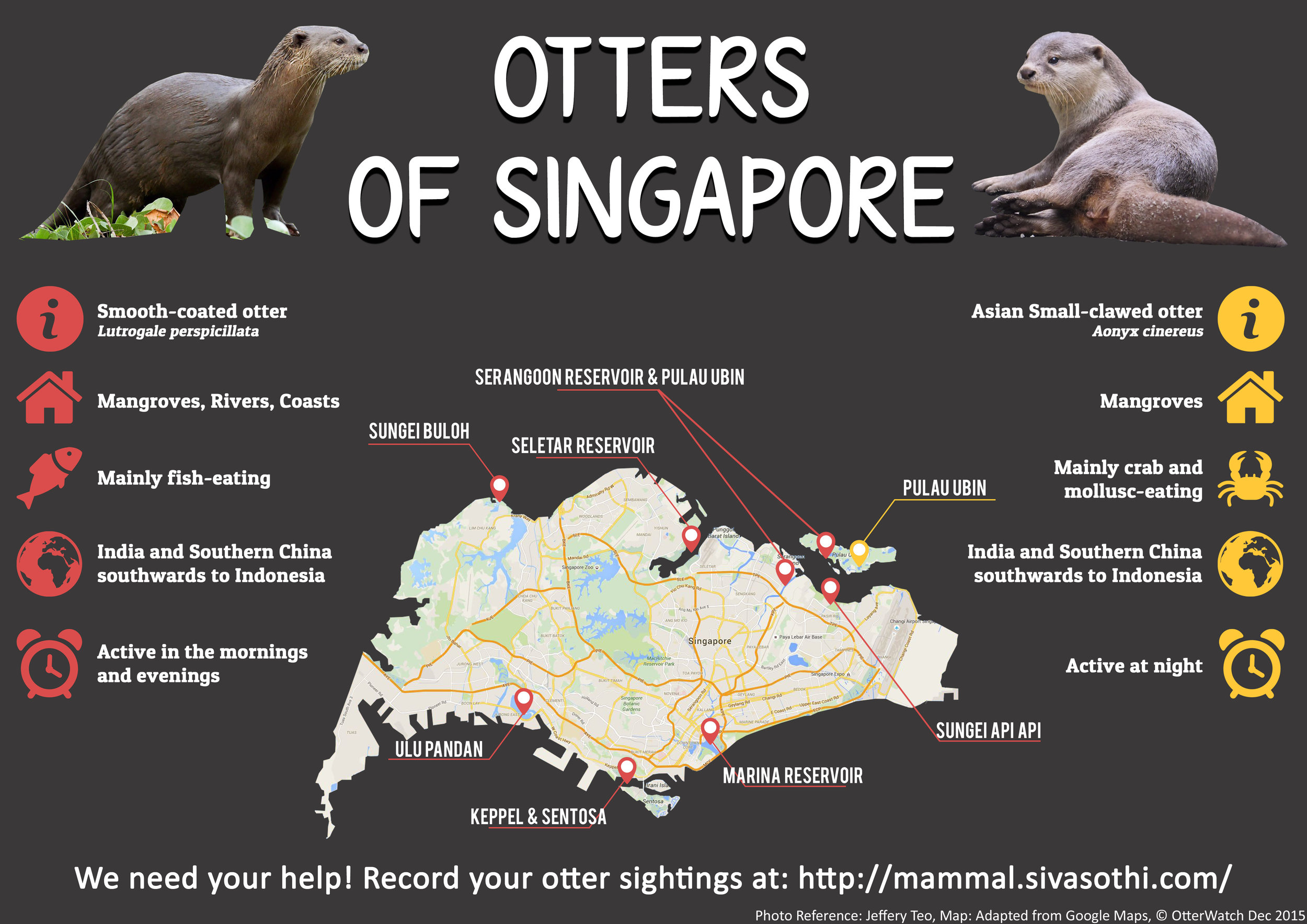 Info Graphic of the 2 Otters species to be found in Singapore
