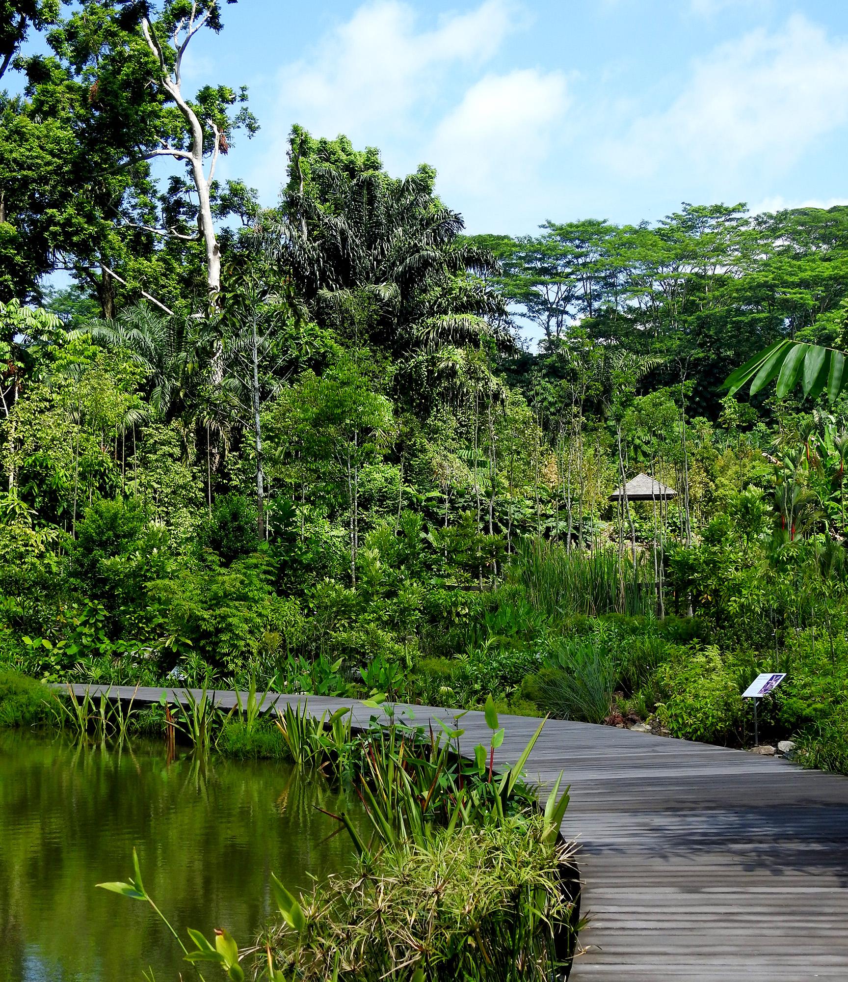 Mid Wetland Boardwalk (Botanists Boardwalk) at the Learning Forest by Stephen Caffyn Landscape Design (SCLD)