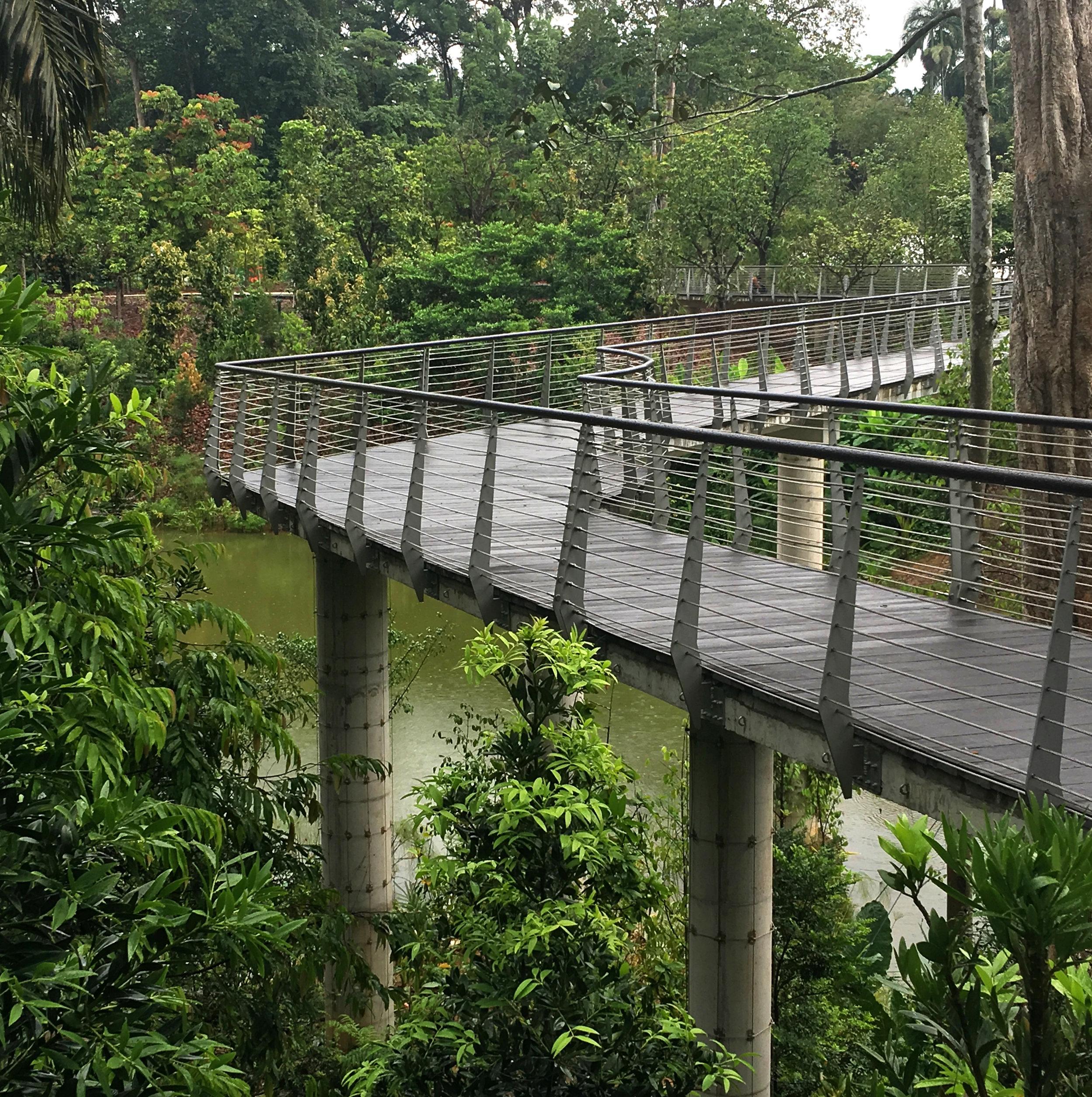 HIgh level walkway over wetlands
