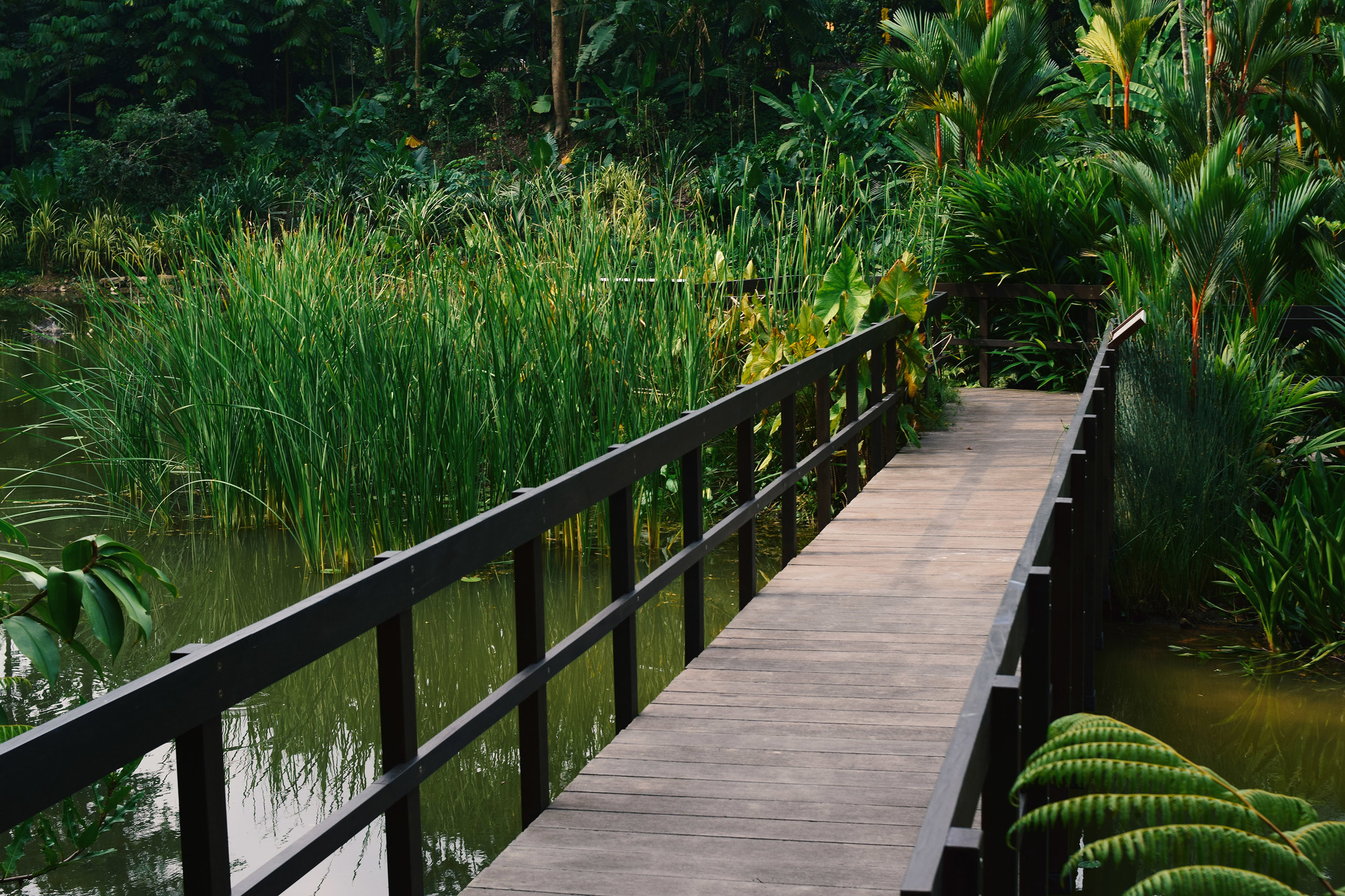 Upper Wetlands - Learning Forest at Singapore Botanic Gardens