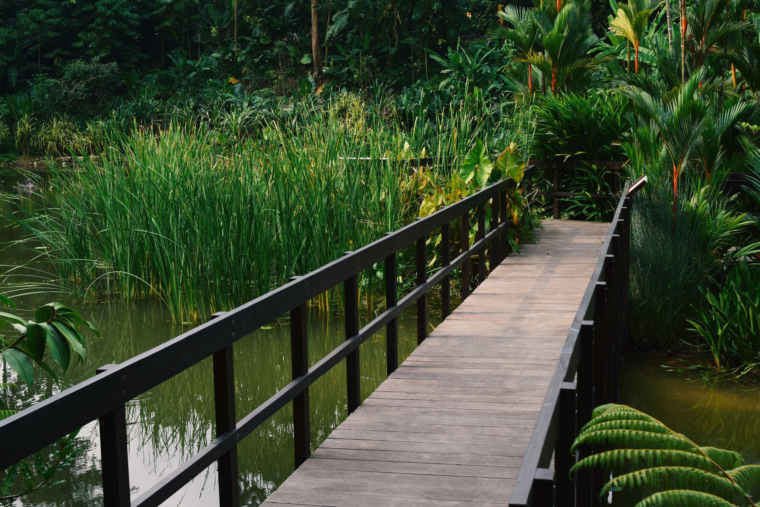 Upper Wetlands -Learning Forest at Singapore Botanic Gardens