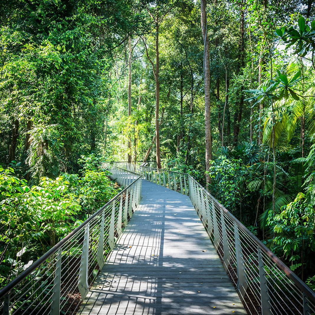Learning ForestSingapore Botanic Gardens -