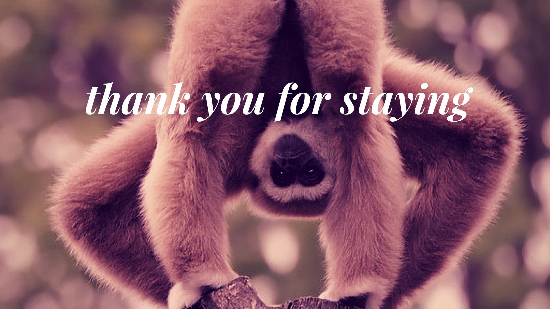 thank you for staying.jpg