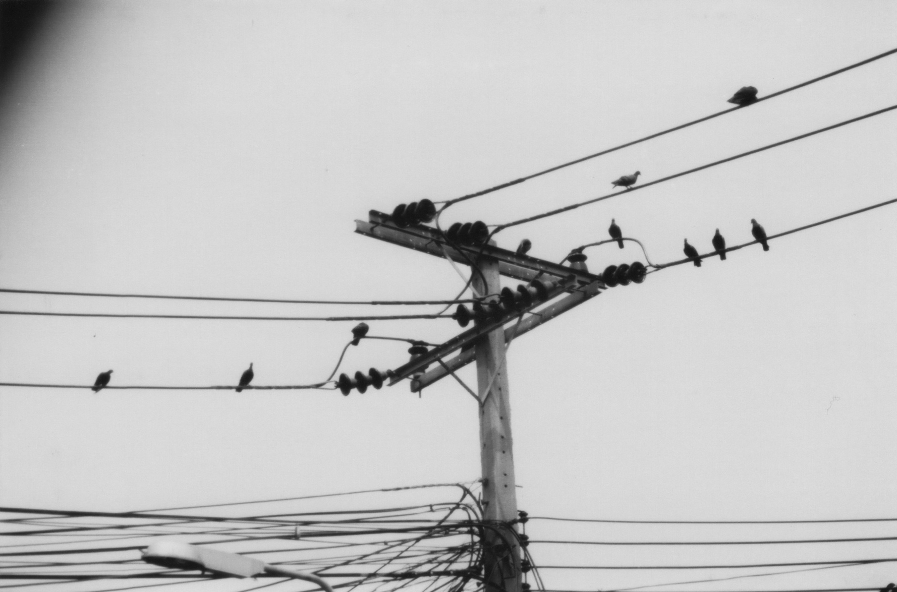 so apparently someone started to compose music from birds on wire.