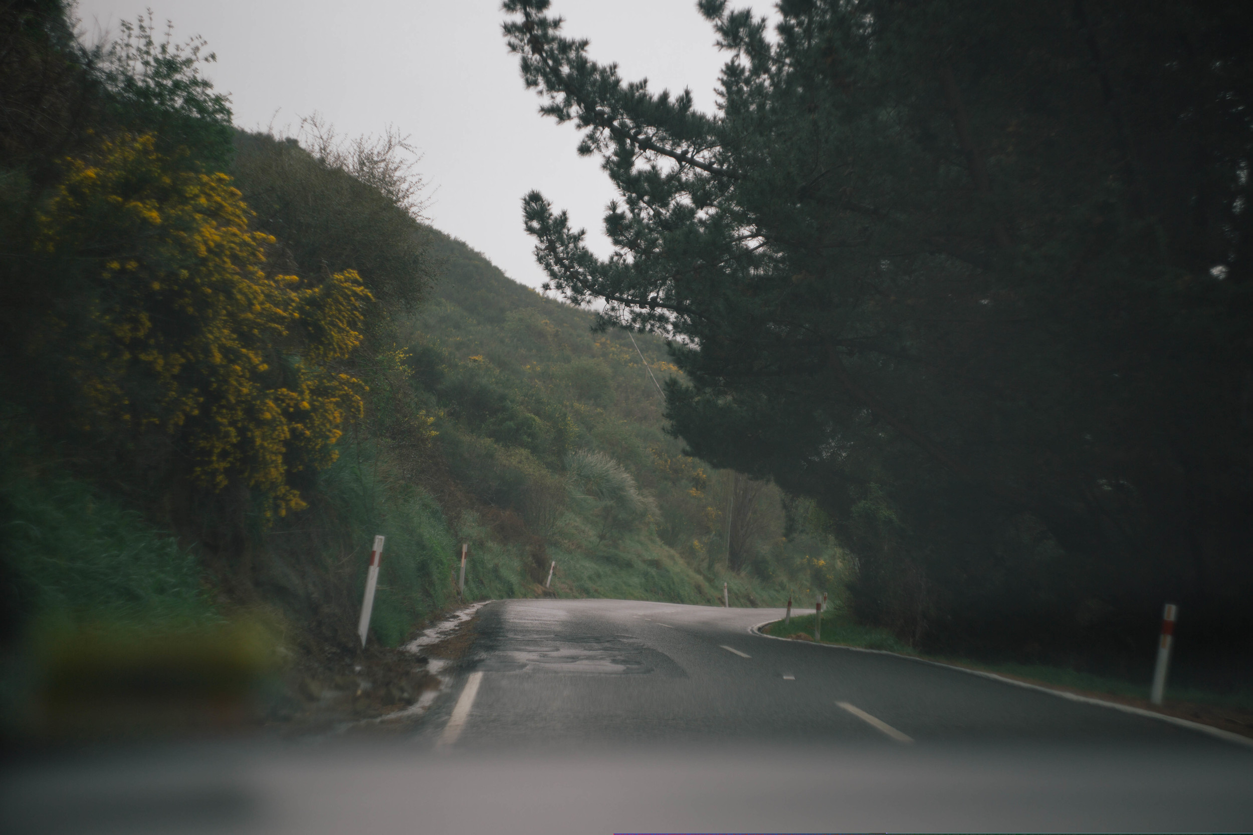 taken by lolra during our drive to see Tim's and her's section in Cass Bay