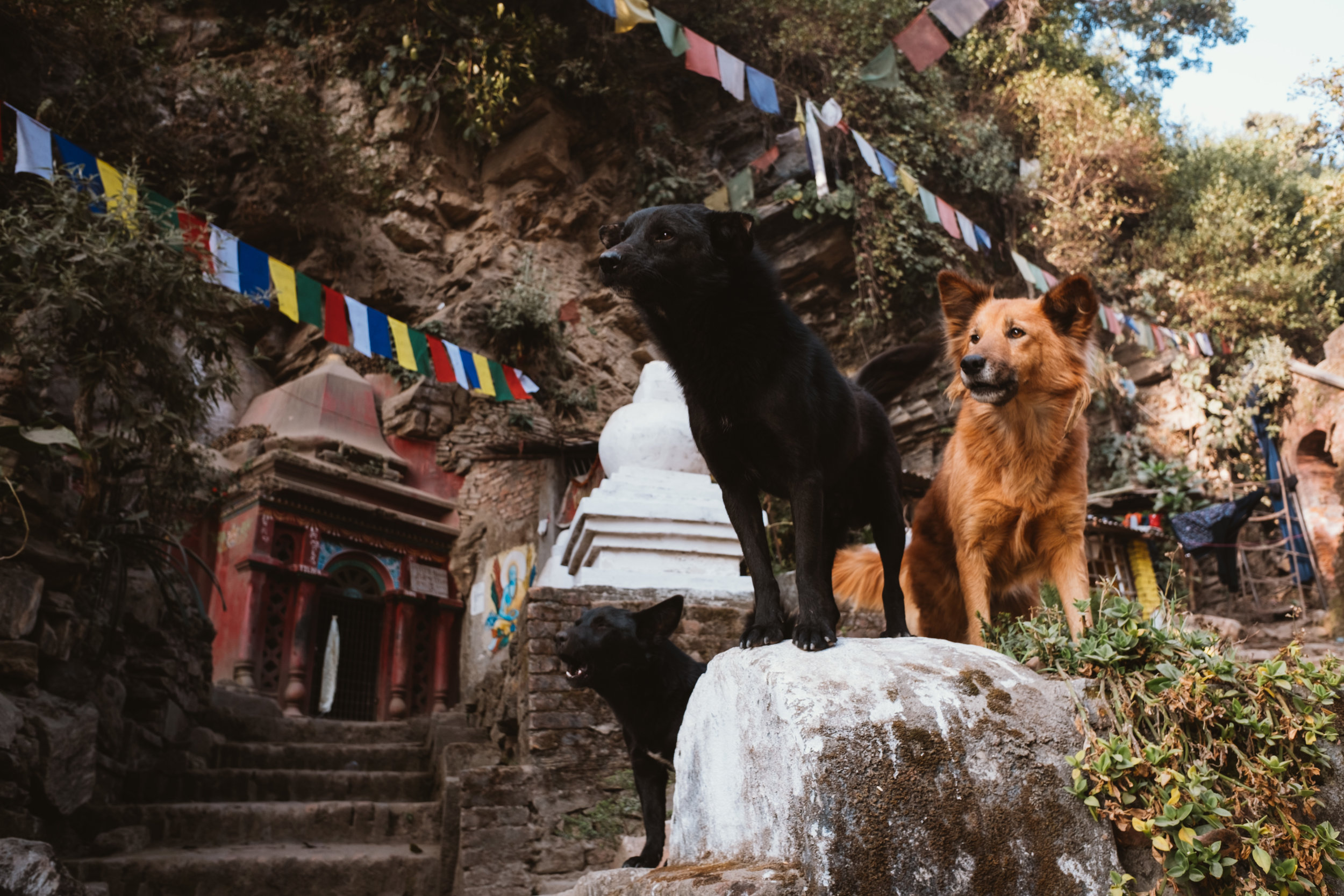 Beautiful dogs.