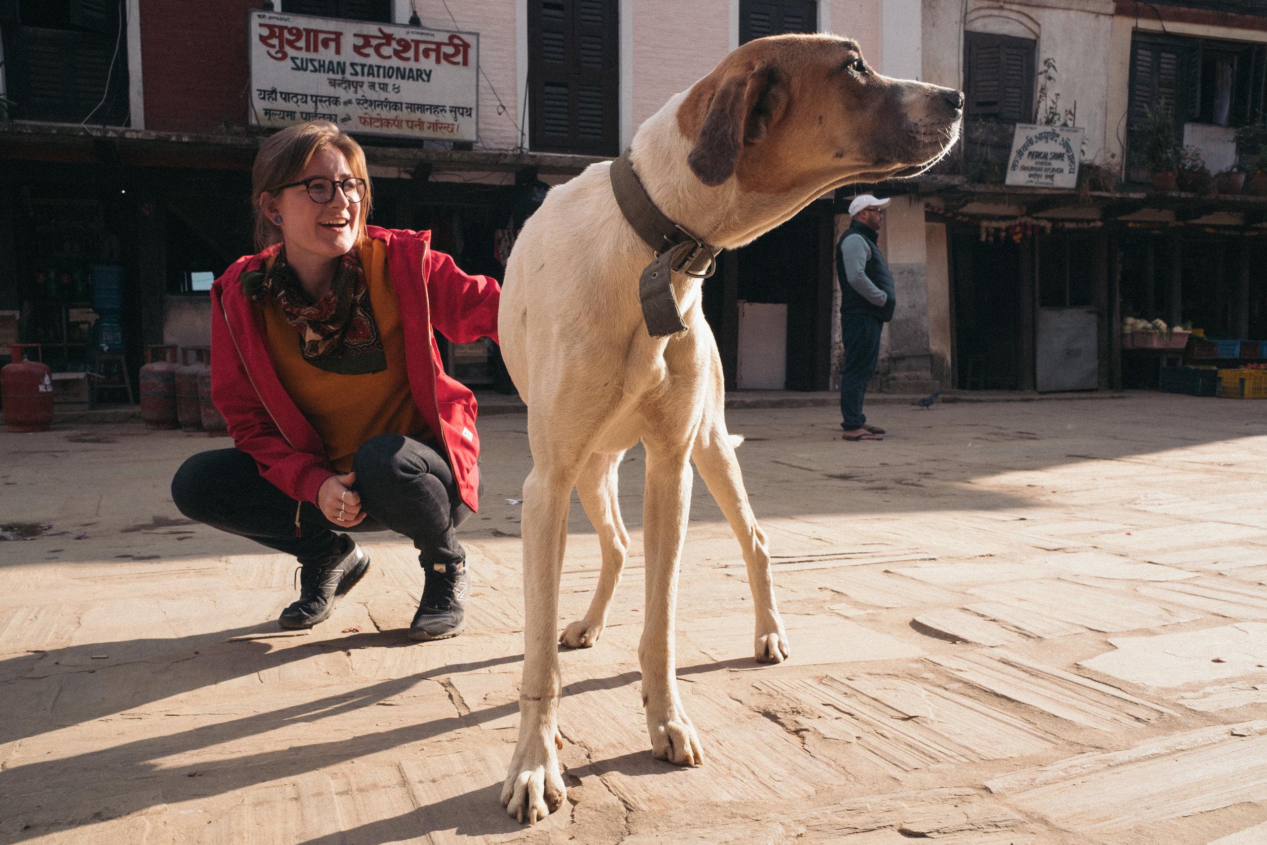A massive dog in Bandipur.