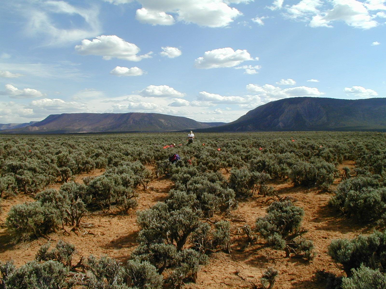Dead Horse Creek Project (2002)