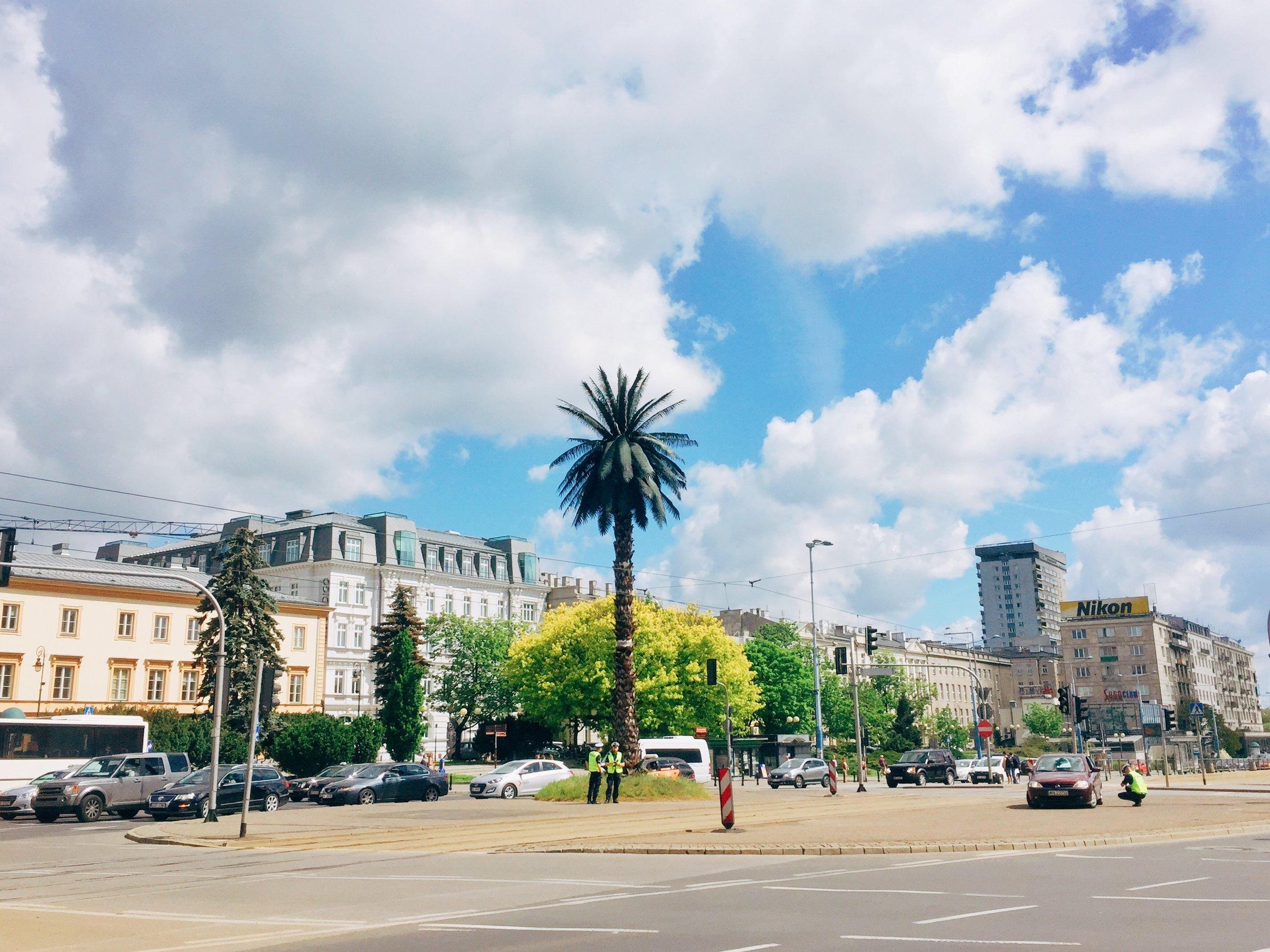 The infamous palm tree on Aleje Jerozolimskie.