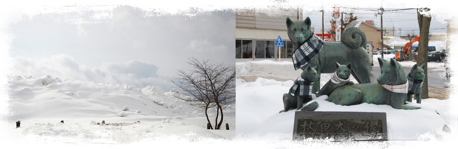 A snowy winter in Odate, the birthplace of the Japanese akita inu